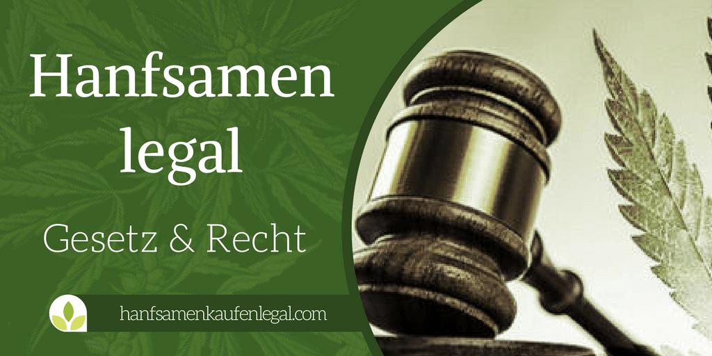 Hanfsamen legal