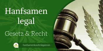 Hanfsamen legal – Gesetz und Recht