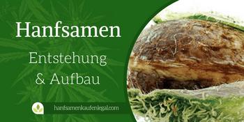 Allgemeines zu Cannabis Samen – Entstehung & Aufbau