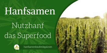 Hanfsamen – Nutzhanf das Superfood