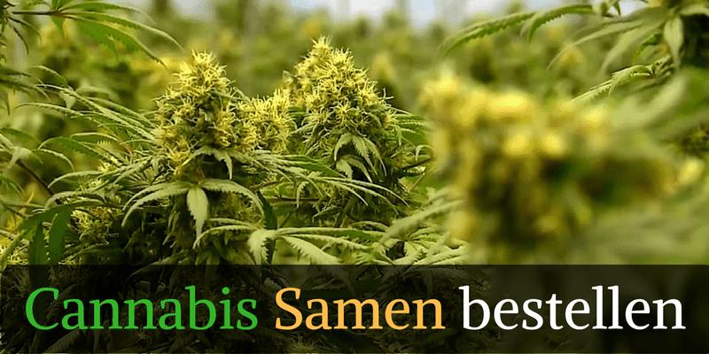 medizinisches cannabis sorten