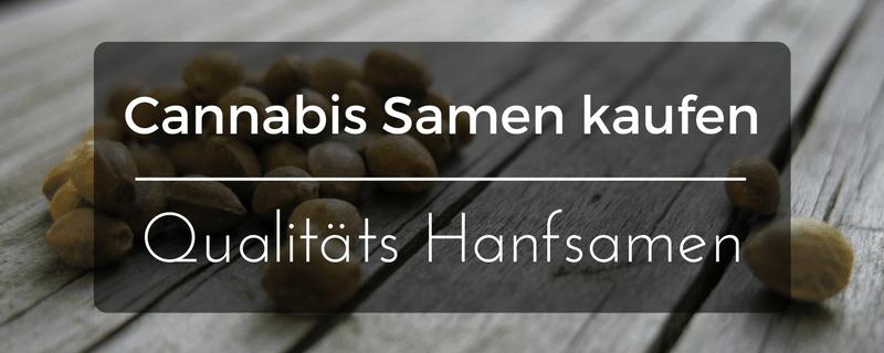 Cannabis Samen kaufen