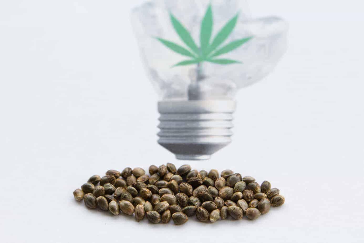 Autoflowering Cannabis Samen