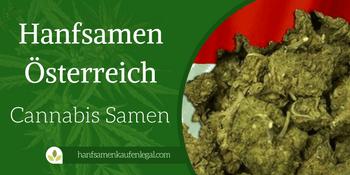 Hanfsamen Österreich – Feminisierte Cannabis Samen