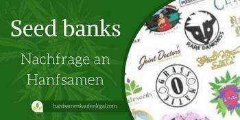 Die besten Seed banks & die Nachfrage an Hanfsamen