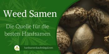 Weed Samen – Die Quelle für die besten Hanfsamen