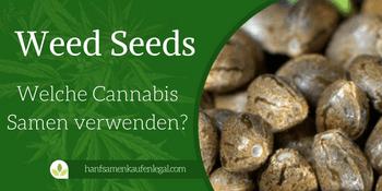 Weed Seeds – Welche Cannabis Samen verwenden?