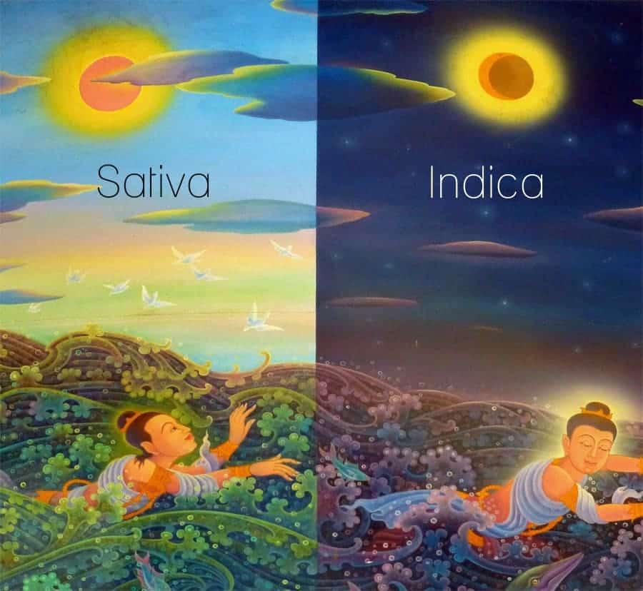 Sativa und Indica