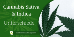 Cannabis Indica & Cannabis Sativa