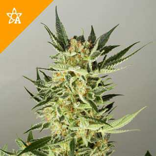 ak48-automatic-photo