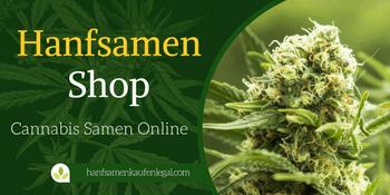 hanfsamen kaufen legal cannabis samen online shop. Black Bedroom Furniture Sets. Home Design Ideas