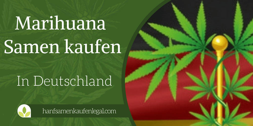 marihuana samen kaufen in deutschland europa. Black Bedroom Furniture Sets. Home Design Ideas