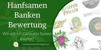 Hanfsamen Banken Bewertung – Wo soll ich Cannabis Samen kaufen?