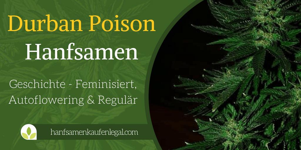 Durban Poison Hanfsamen
