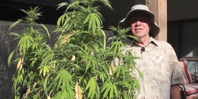 ed-rosenthal-cannabis-durban-poison