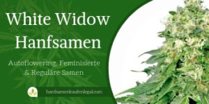 White Widow Hanfsamen FI